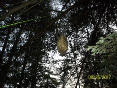 foodbag hanging from a tree limb