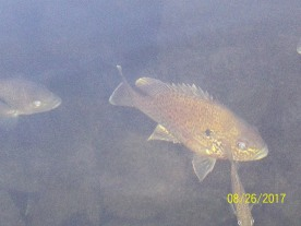 fish in Pharaoh Lake